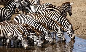 12 Days East Africa Safari Highlight Tour