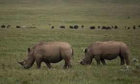 10 Days Kenya Camping Safari Tour