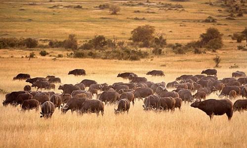 Naivasha - Nakuru - Mara - Mombasa Or Nairobi Tour