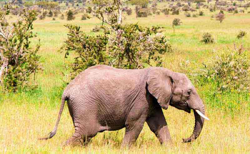 8 Days Best Of Tanzania Safari Tour