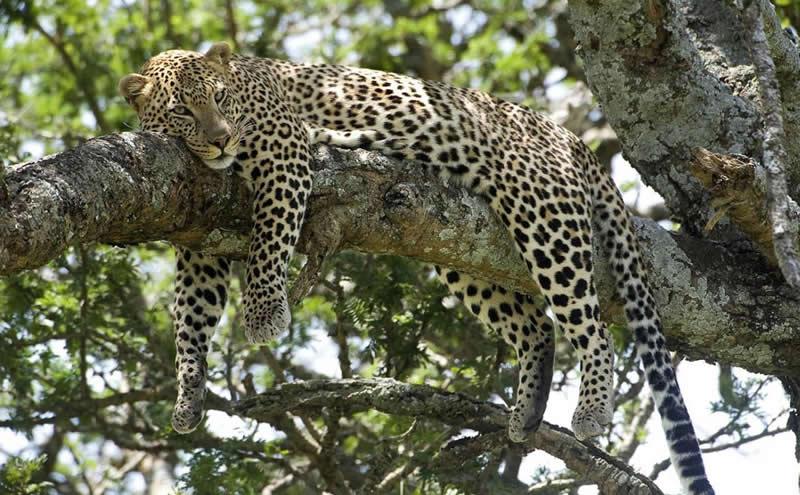 East Africa Camping Safari Tour