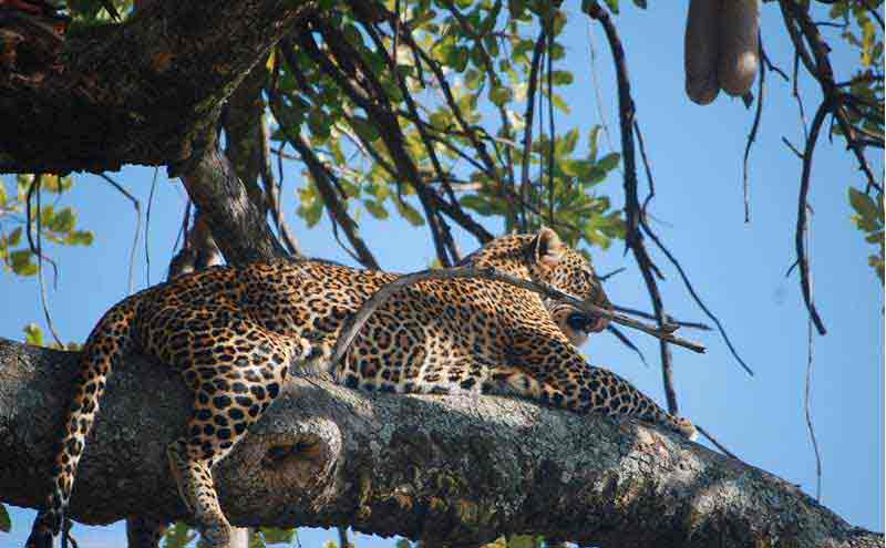 Best Of East Africa Safari Tour