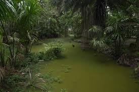 4 Day Amazon Leticia Amazonas Jungle Eco Tour Package