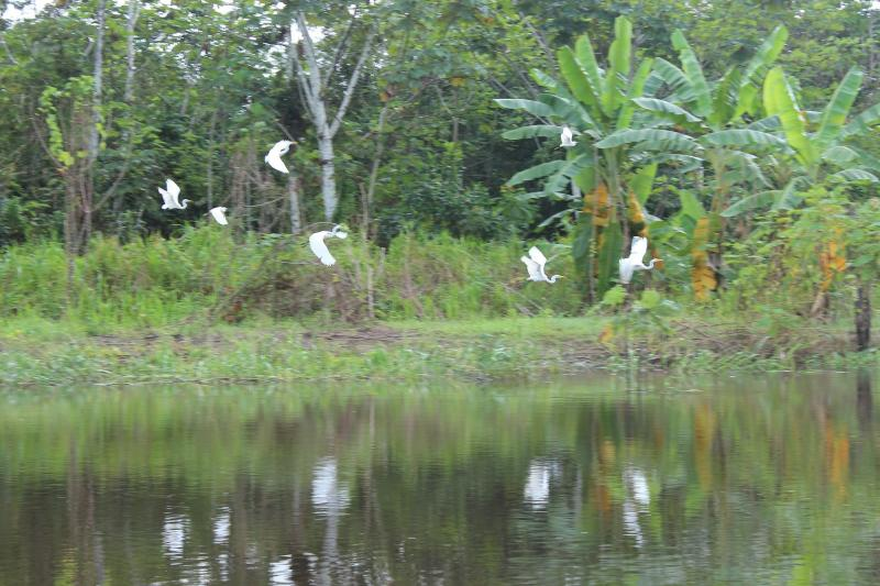 Pacaya Samiria National Reserve 3 Days 2 Nights Package