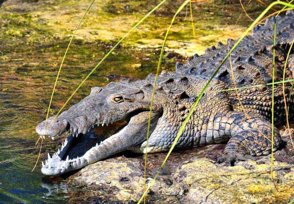 Caiman Tour Package