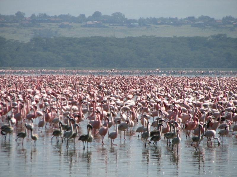 Lake Manyara - Ngorongoro Tour