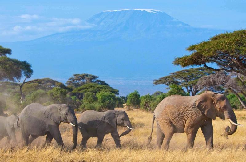 03 Days Tsavo-west & Amboseli Tour