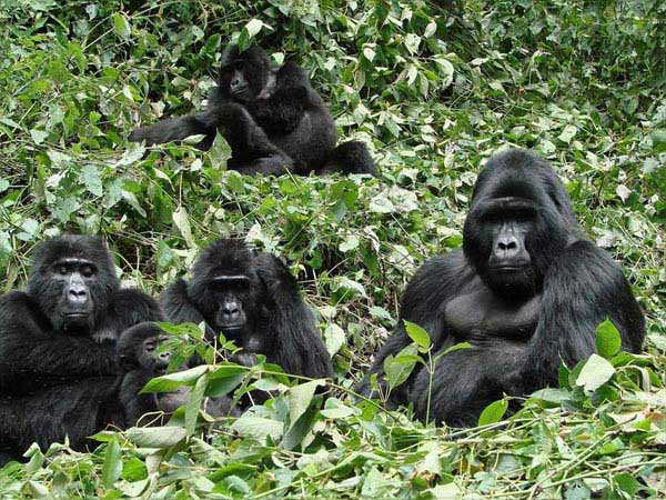06 Days Lake Mburo, Bwindi National Park Tour