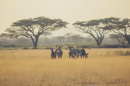 Ol Pejeta - Shaba - Mount Kenya Safari Tour