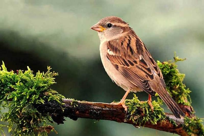 Exciting Bird Watchers' Paradise Tour