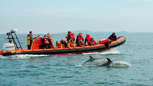 Dolphin And Whale Adventure Tour