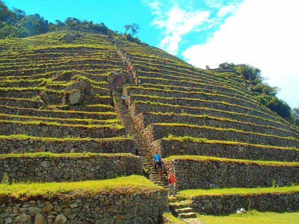 The Centenarian Crops Of The Incas Package