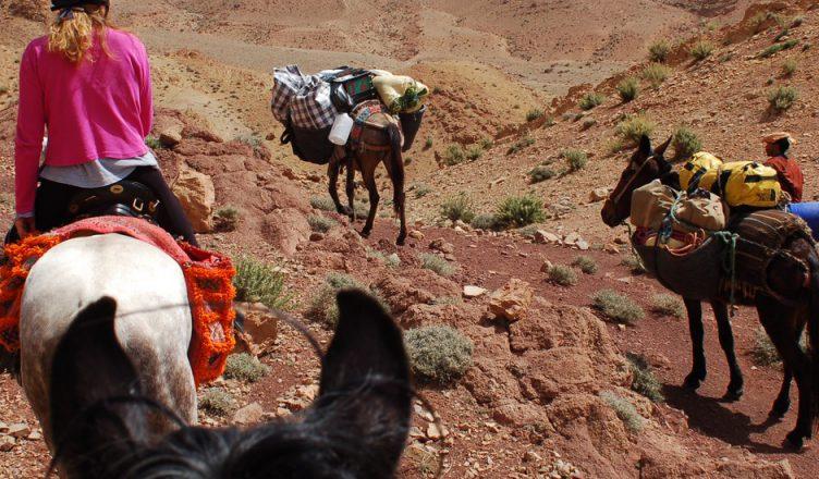 Trip Morocco : Horseback Riding In Marrakech Tour