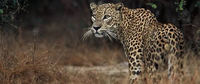 Sri Lanka Wildlife Tour Package