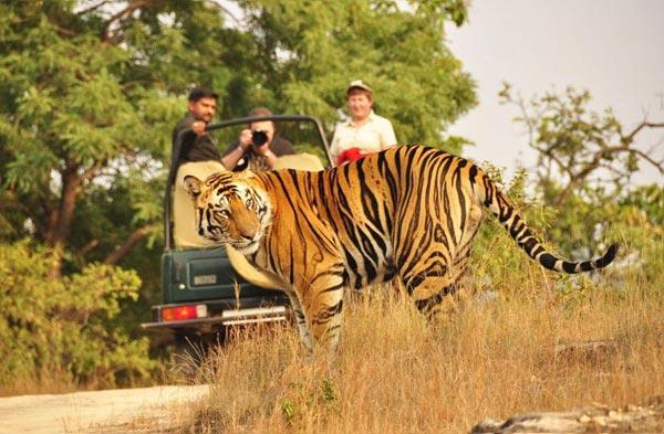 India Wildlife Safari Package