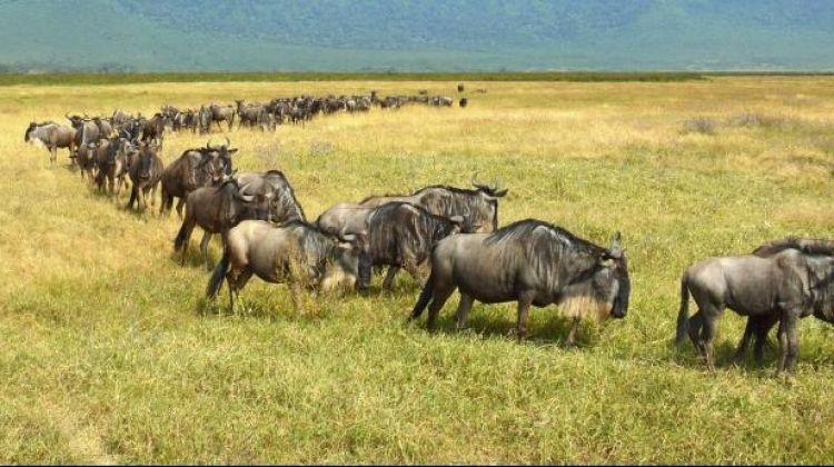 Tanzania Safari & Wildebeest Migration Package