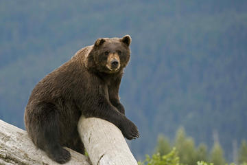 Alaska Wildlife Tour Package