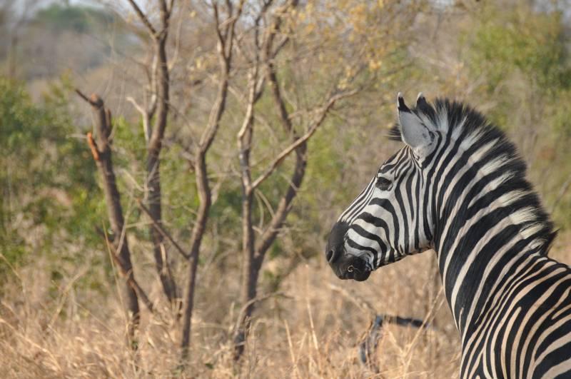 Nature Safari