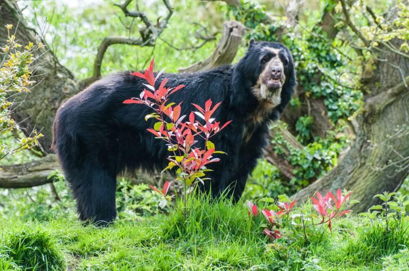 Paddington Bear In Peru Package