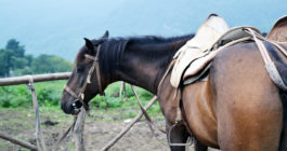 Horse Riding Tour In Armenia