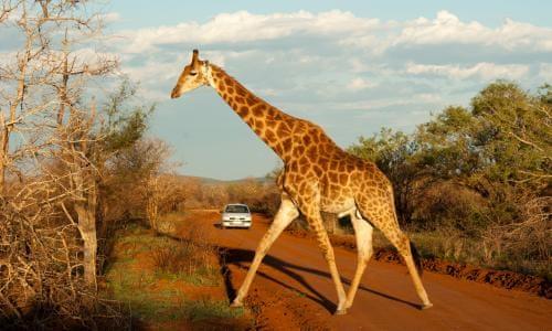 Full Day Pilanesberg Game Reserve & Sun City Tour