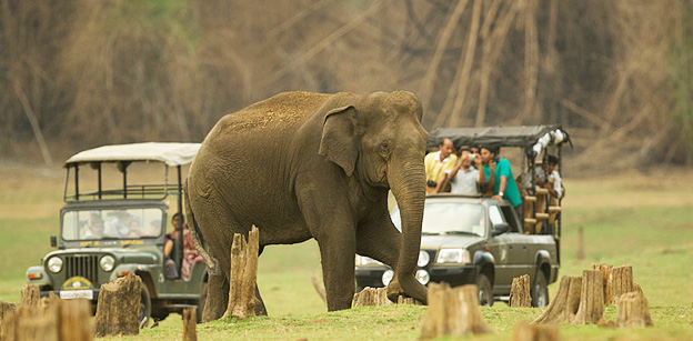 Kabini, Bandipore, Madhumalai National Park ,With Ooty Tour