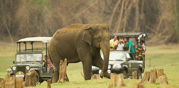 Kabini, Bandipore, Madhumalai National Park ,With Ooty Tour
