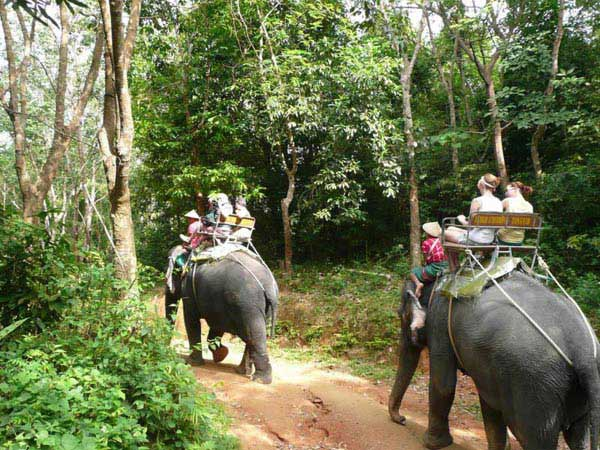 One Night Dhikala Tour Package