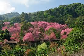 Scenic Thailand Tour