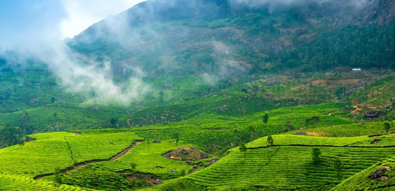 Munnar Delights - Honeymoon Special Tour