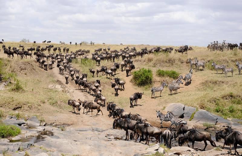 Great Migration - Masai Mara Tour