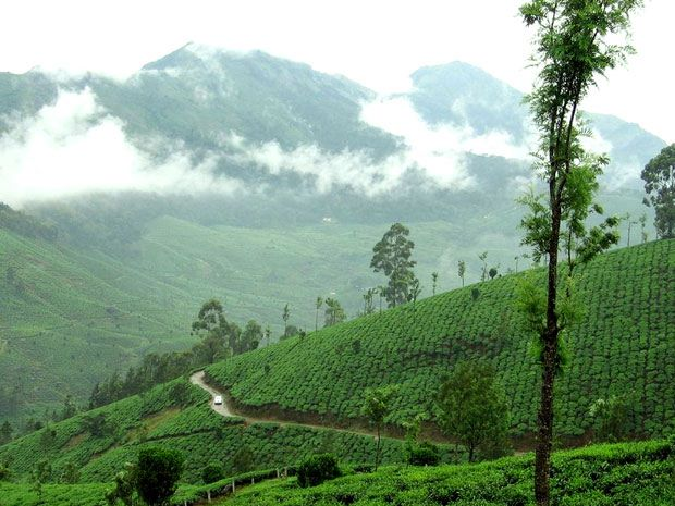 Kerala Tour Packages Vagamon