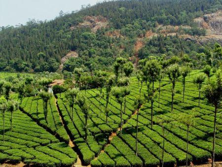 Kullu Manali Shimla Honeymoon Tour Packages From Eluru