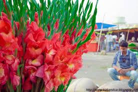 Kullu Manali Shimla Honeymoon Tour Packages From Thrissur