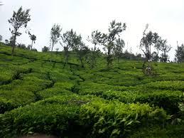 Kullu Manali Shimla Honeymoon Tour Packages From Ratlam