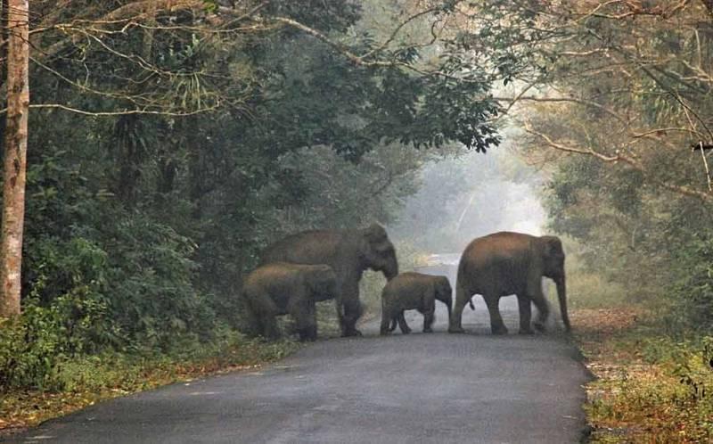 Wildlife Tour Packages - Dooars