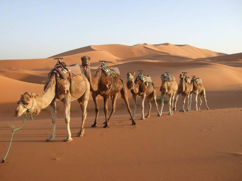 Rajasthan Camel Safari Tour Package