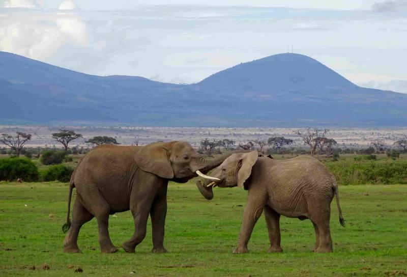 Adventurous Kenya Tour