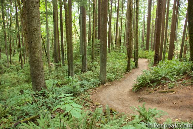 Karnataka Forest Trail Tour