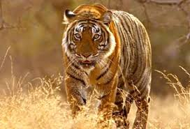 Golden Triangle With Wildlife Of India Tour