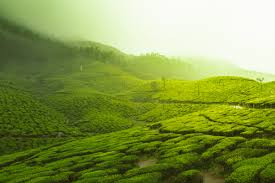 Highlights Of Kerala Tour