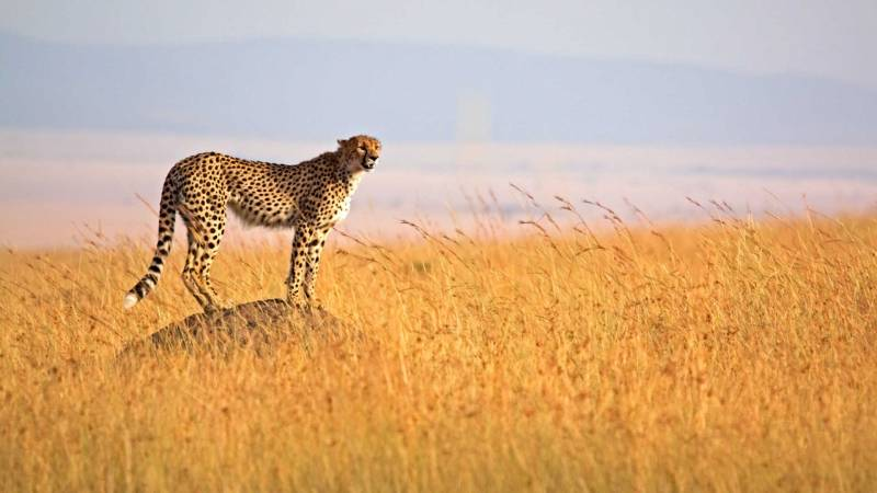 Spectacular Kenya & Tanzania  Tour Package