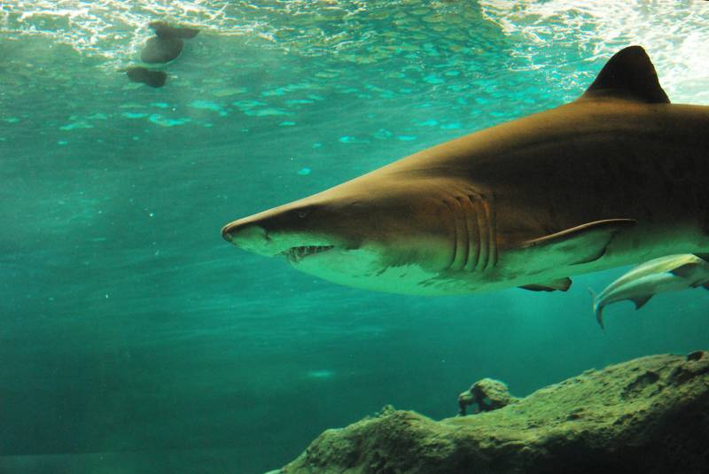 Cape Shark Diving & Viewing Tour Package