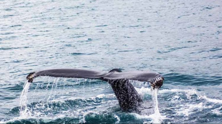 Cape Whale Route Tour Package