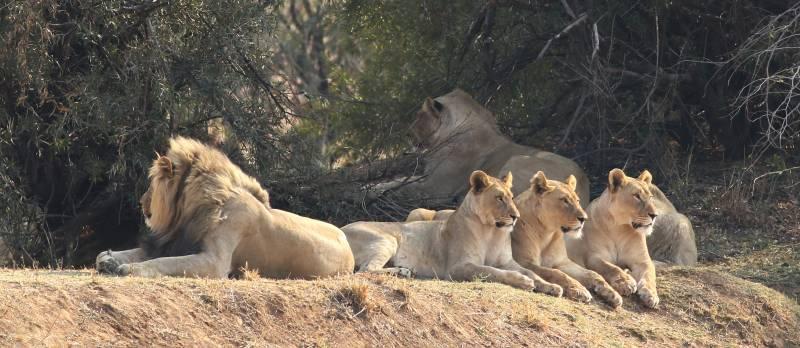 Pilansberg Safari Tour Package