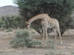 Best Safari Deal Tour Package