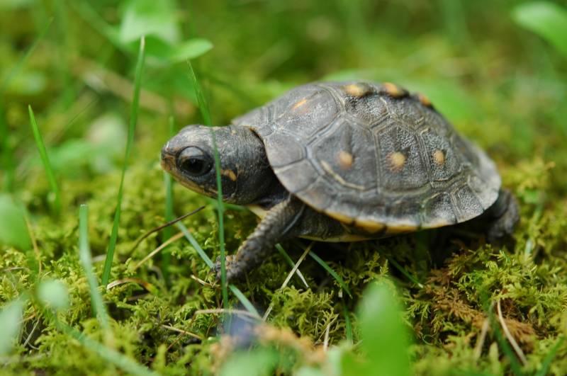 Turtles By Night Package