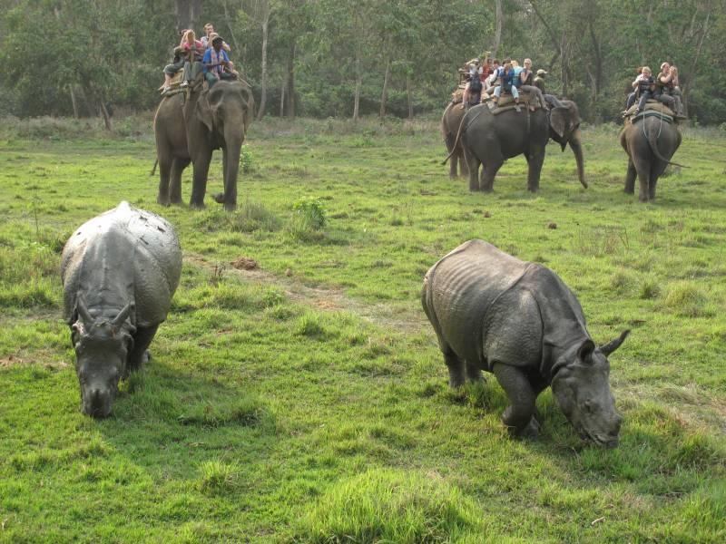 India & Nepal Wildlife Tour