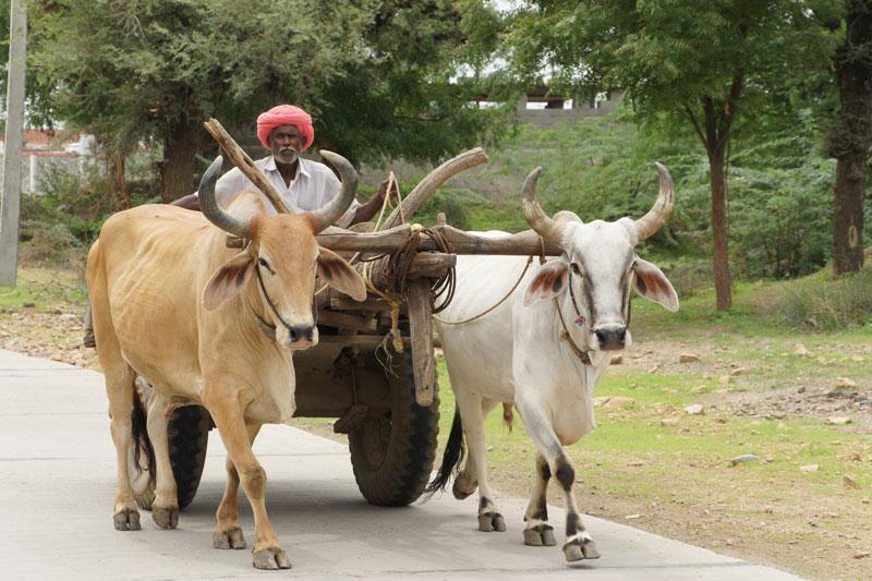 Best Of Gujarat With Wildlife 11 Days