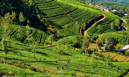 Scenic Sri Lanka Package